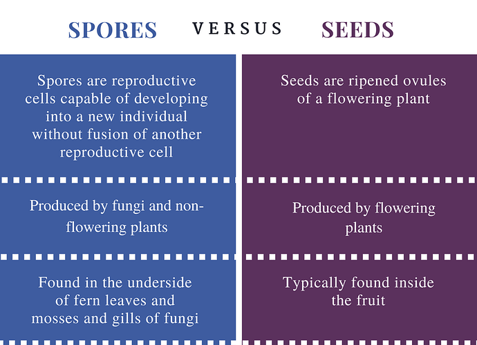 Difference-Between-Spores-and-Seeds-Comparison-Summary